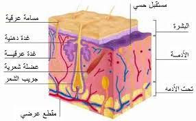 صور تعريف الجلد كمصطلح رياضي