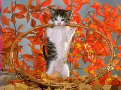 صور قطط رائعة 0f4e0c9926.jpg