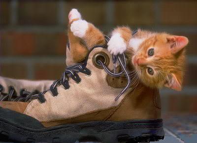 صور قطط جميلة 0ac2a72737.jpg