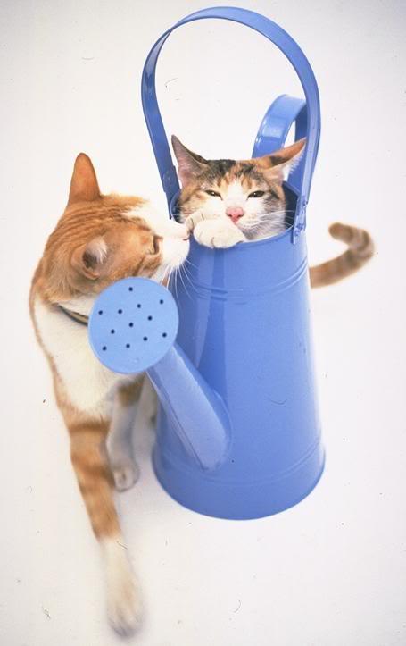 صور قطط جميلة UL00046.jpg