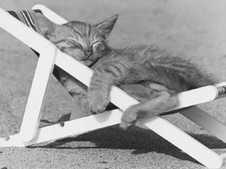 صور قطط رائعة 0037.jpg