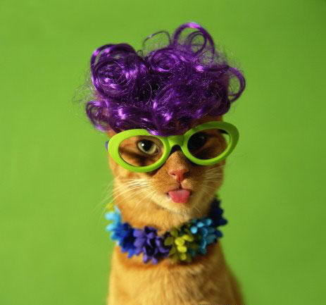 صور قطط جميلة 55.jpg