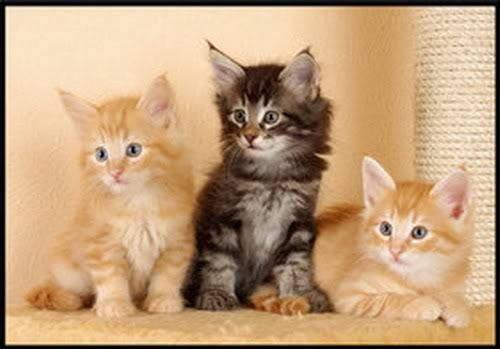 صور قطط رائعة aa11vd5.jpg