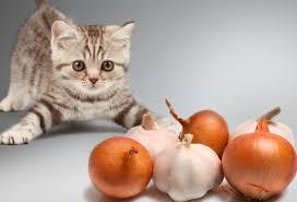 صور تاثير الثوم على القطط