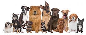 صور كلاب البرجي