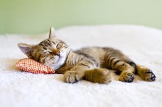 صور ابيات شعر عن النوم