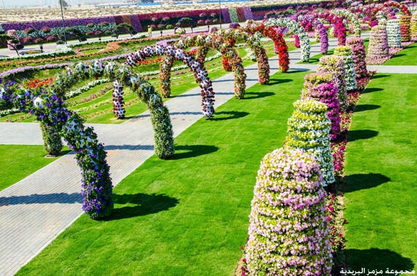mz mz 11501 صور: افتتاح دبيِ ميراكل جاردن اجمل واكبر حديقة مِن الورود الطبيعية فِيِ العالم