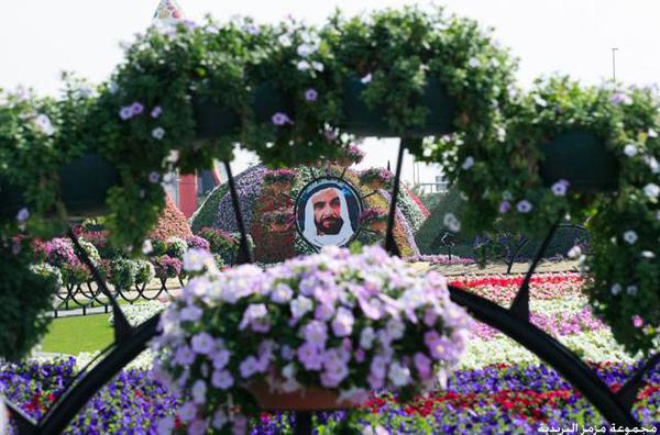 mz mz 3671 صور: افتتاح دبيِ ميراكل جاردن اجمل واكبر حديقة مِن الورود الطبيعية فِيِ العالم