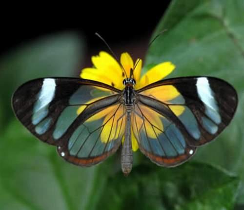 صورة اجمل مخلوقات الارض شفافيه