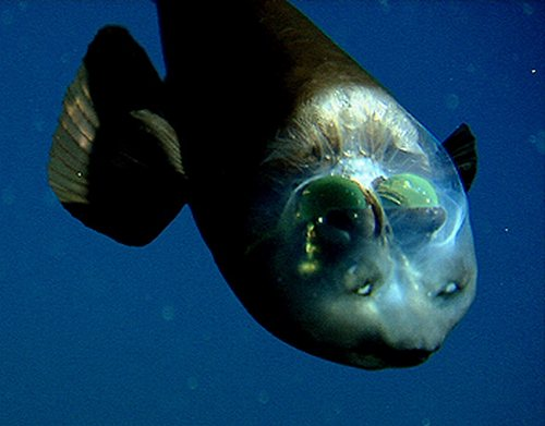 صور اجمل مخلوقات الارض شفافيه