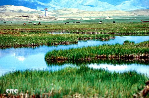 صور مقالات علمية عن البيئة