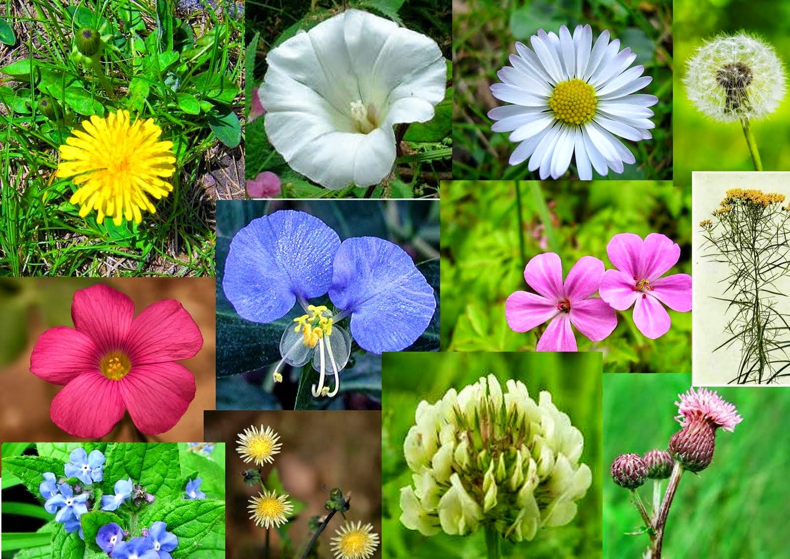 اسم ازهار بالانجليزي  Flowers names in English