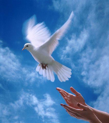 صورة مقالة عن السلام