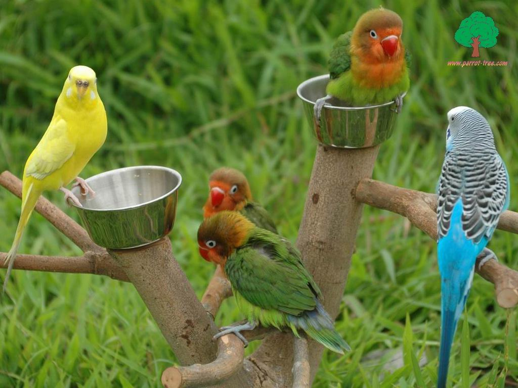صورة صور طيور متحركة تجنن