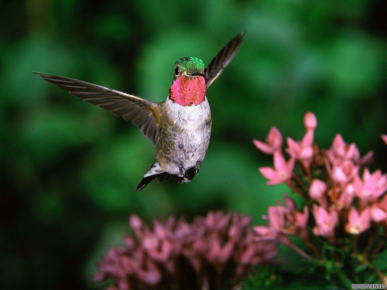 صور صور طيور متحركة تجنن