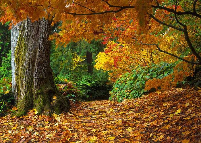 صور موضوع وصف الخريف
