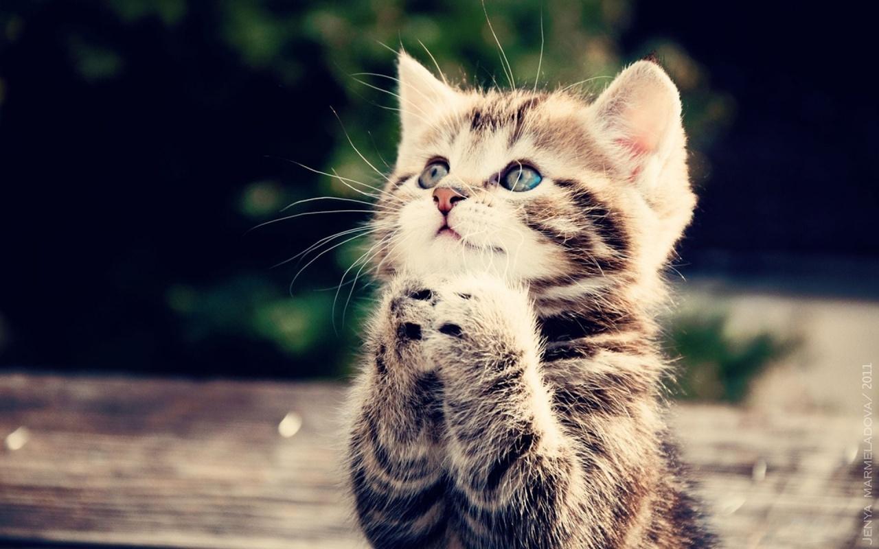 صور ما يطلق على صوت القطة