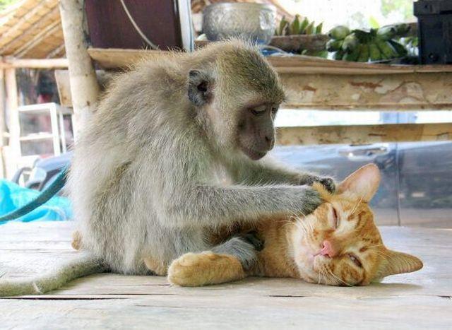صوره صور مضحكة جدا عن الحيوانات
