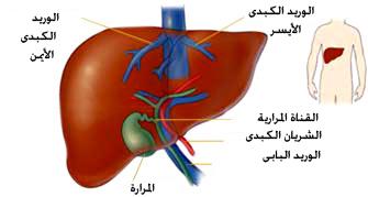 صورة عراض مرض الكبد