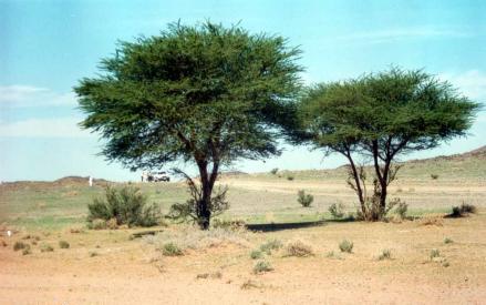 صوره تعريف الشجرة وفوائدها