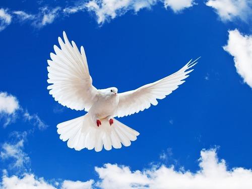 صور مفهوم السلام العالمي