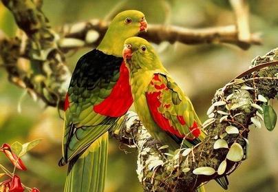 صور لغز شجرة فوقها عدد من العصافير