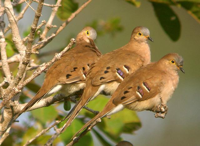 بالصور لغز شجرة فوقها عدد من العصافير 20160719 2801