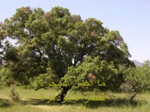 صور انشودة عن اهمية الشجرة