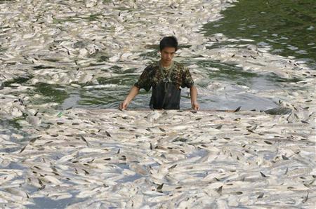 صور معنى التلوث المائي