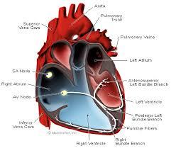 صور الزيادة المفاجئة في دقات القلب