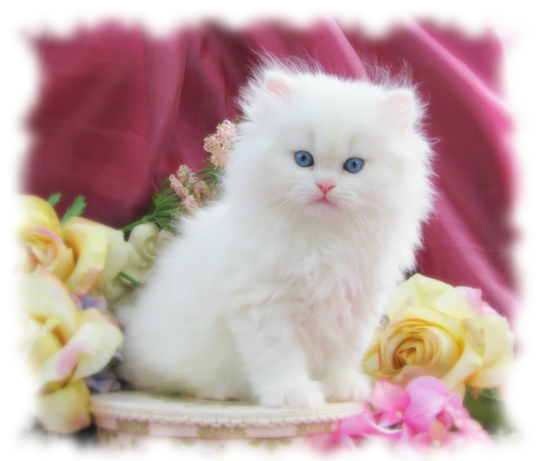 صور صور قطط شكلها رهيب