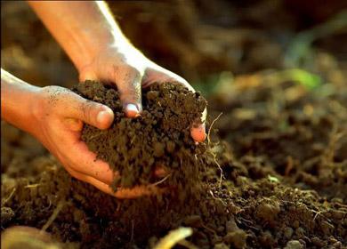 صوره المسكة في التربة