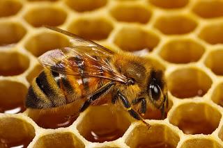 صوره فوائد الاكتحال بالعسل