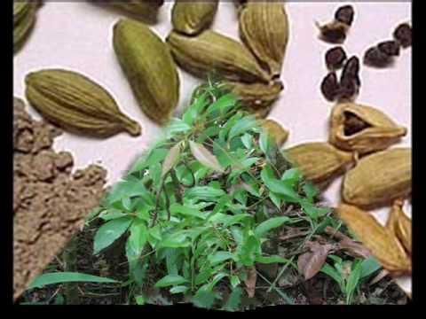 صور نبات الهيل