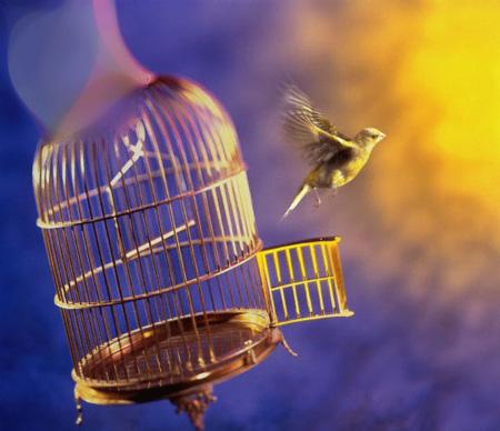 صور تعريف مفهوم الحرية