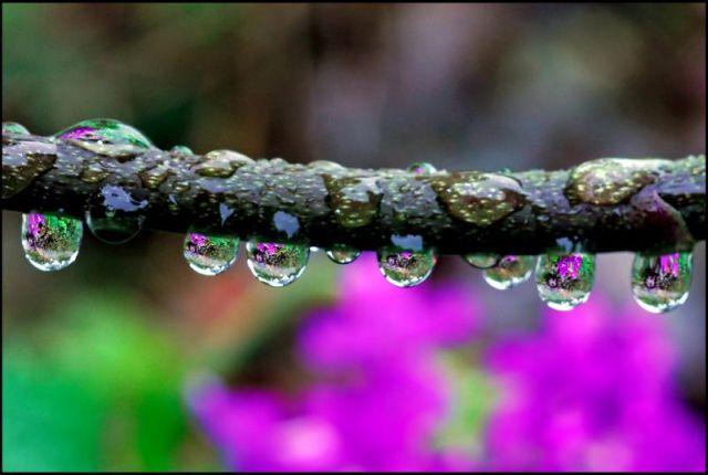 جمال قطرات ألمطر .<br />سبحان الله 9697842bcd.jpg