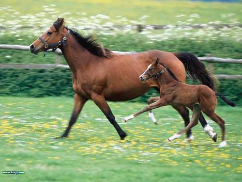 صور صور رائعة اجمل الخيول