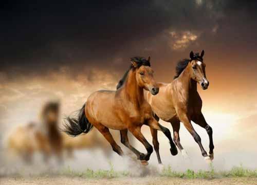 اجمل صور خيول رائعه