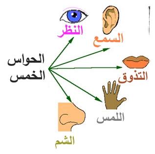 صورة الحواس الخمسة وتفسيرها