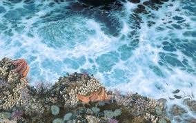 صور مقالة وصفية حول البحر