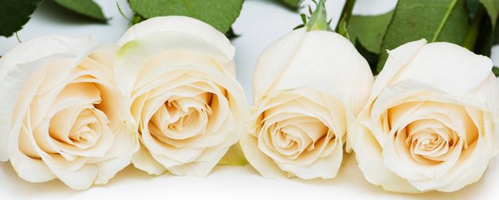 صورة صور ساحرة لانواع الزهور