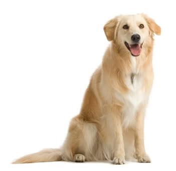 صورة صوت الكلب
