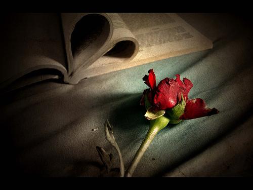 صورة قصص حب قصيره معبرة جدا