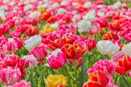 صورة زهور جميله ملونه بالطبيعه