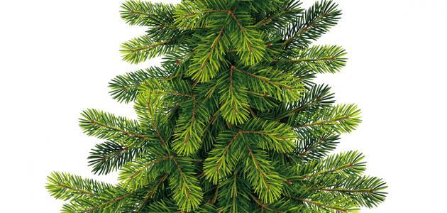 صورة موضوع عن الشجرة