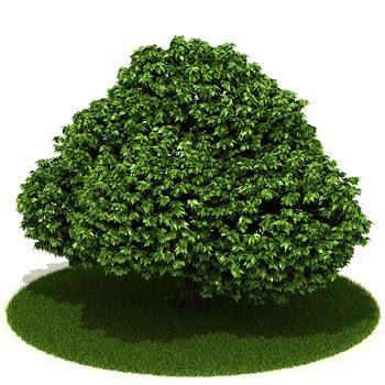 صور شعر عن الشجرة قصير