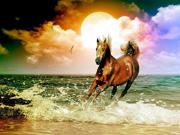 خلفيات خيول جميلة خلفيات خيول رائعه
