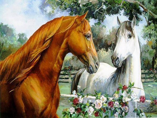 صورة خلفيات خيول جميلة n خلفيات خيول رائعه