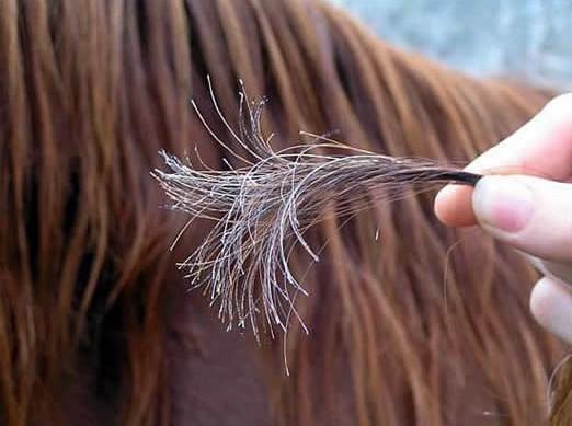صورة علاج الشعر التالف