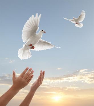 صور تعريف السلم والسلام